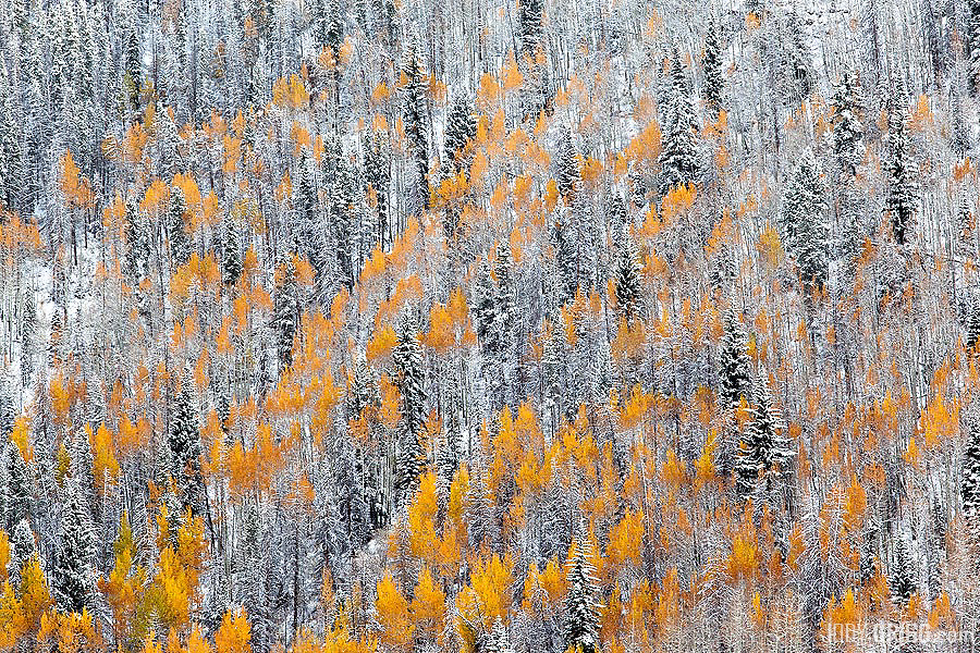 A fresh snow fall makes a beautiful scene along the Vail valley.