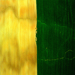Aerial art abstract of a farm in Lancaster, PA.showing geometry of lines in the earth.