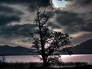 A haunting tree on Lopugh Leane in Killarney, Kerry.<br /> Picture by Don MacMonagle