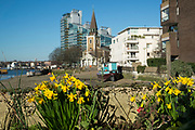 St Marys Church in Battersea surrounded by modern apartment buildings with daffodils in the foreground in London, England, United Kingdom. This is the new face of London, as new build apartments are filling up every space along the riverside of the River Thames. In particular around this area near Chelsea and Wandsworth.