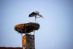 THEMENBILD - Die Freistadt Rust am Neusiedlersee wird auch Hauptstadt der Stoerche genannt. Der Weissstorch (Ciconia ciconia) zaehlt zu den groessten Landvoegeln Europas. Das Federkleid ist bis auf die schwarzen Schwungfedern rein weiss. Schnabel und Staender sind rot. Hier im Bild ein Weissstorch kratzt sich am Schnabel in seinem Nest am Kamin eines Ruster Wohnhauses am Dienstag 15. September 2020 in Rust // The free city of Rust on Lake Neusiedl is also called the capital of the storks. The white stork (Ciconia ciconia) is one of the largest land birds in Europe. The plumage is pure white except for the black flight feathers. Beak and pennants are red. Here in the picture a white stork scratches its beak in its nest on the chimney of a house in Rust on Tuesday 15 September 2020. EXPA Pictures © 2020, PhotoCredit: EXPA/ Johann Groder