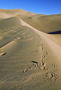 Raven tracks and feather in Great Sand Dunes National Park