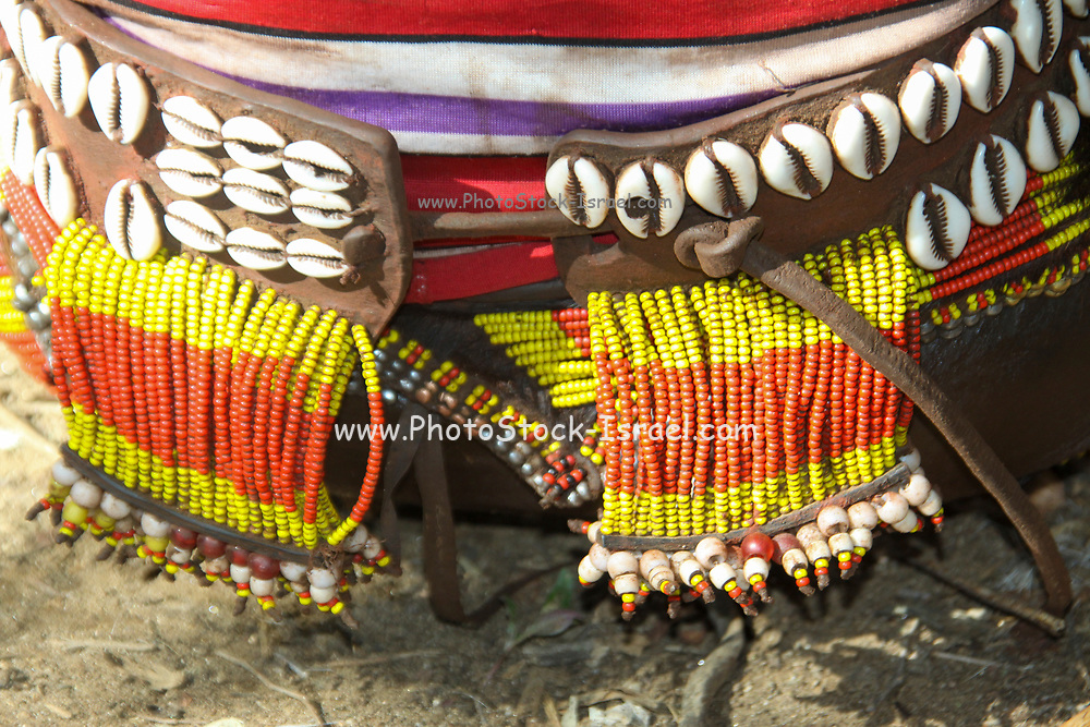Close up of a leather waistband of a Hamer tribeswoman decorated with colourful beads and shells Photographed in the Omo River Valley, Ethiopia