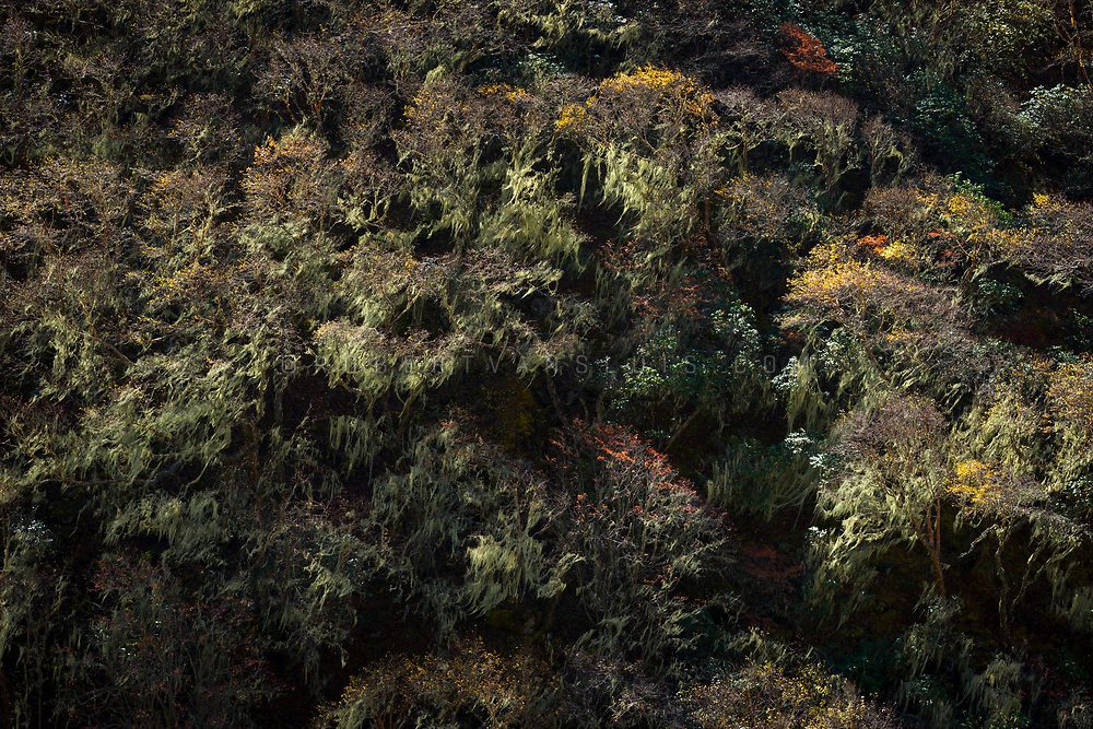 Vegetation in the valley below Ama Dablam, Nepal. Photo © robertvansluis.com