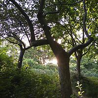 Parfois ça aide d'être petit, par exemple quand ça permet de profiter d'un rayon de soleil sous un arbre en début de journée.<br /> <br /> Sometimes it helps being shorter, for example when it gets you a chance to catch some sunlight from under a tree at sunrise.