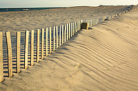 Sand dune erosion control Assateague Island National Seashore.
