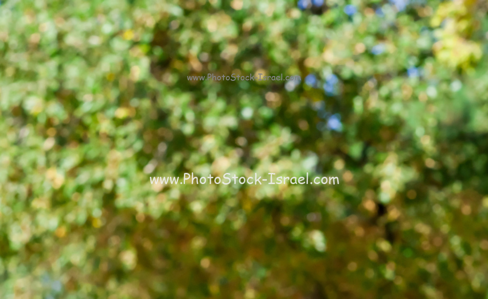 Out of focus foliage in a garden