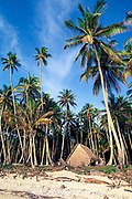 coconut palms and traditional thatch house, Tobi Island, Southwest Islands, Palau or Belau, Micronesia, ( Western Pacific Ocean )