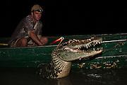 Catching Black Caiman (Melanosuchus niger)<br /> Ashley Holland<br /> Rupununi,<br /> Guyana,<br /> South America