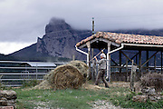 animal farming with Pic de Bugarach in the background South France