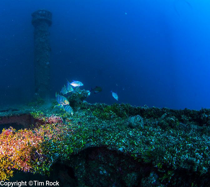 WWII Japanese shipwreck in Guam's Apra Harbor. It sits next to a WWI German ship named SMS Cormoran. The ship was launched on May 16, 1930. The Tokai Maru was sunk by the USS Snapper later, on August 27, 1943.