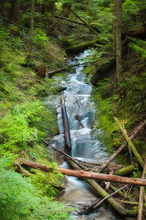 This beautiful, fast-moving stream flows down from the heights of West Tiger Mountain just east of Renton, Washington where it joins the Raging River about a half-mile downstream.