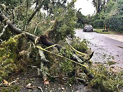 A tree downed by Hurricane Matthew lies across Via Tuscany street on Friday, Oct. 7, 2016 in Winter Park, Fla. Photo by Joe Burbank/Orlando Sentinel/TNS/ABACAPRESS.COM