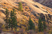 autumn in the Grande Ronde River Canyon, WA, USA