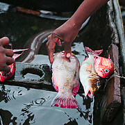 Fishermen selling the recently catched fish right from the