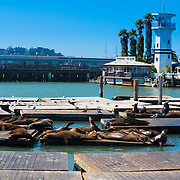 Pier 39 sea lions, San Francisco