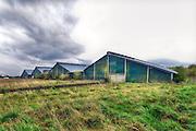 Nederland, Groesbeek, 15-4-2016In 2002 bouwde agrarisch ondernemer Van Deurzen een nieuw stallencomplex, legbatterij, voor 300.000 kippen in Groesbeek. Voor deze locatie blijkt het, vanwege de stanknormen Wet Geurhinder, wettelijk onmogelijk om een milieuvergunning af te geven.Al met al staat het bedrijf er al vijf jaar, waarvan driekwart van de tijd illegaal. Inmiddels zijn deze maand de stallen per veiling, opbod, verkocht aan internetmiljonair Kees Kollen. Het is nog onduidelijk wat die met het megastallen complex wil gaan doen.Foto: Flip Franssen/Hollandse Hoogte