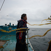 May 29, 2013 - Togura, Japan: A fisherman from Togura, recover nets at sea near the small village of Minami Sanriku in Miyagi prefecture. Togura, a small fishing village in Minami Sanriku, was vastly destroyed by the 2011 tsunami that hit the northeast coast of Japan. Thousands died and hundreds of families lost their houses, business and boats. The recovering community works now in a cooperative system where the few remaining boats, spared by the tsunami, are shared by all. (Paulo Nunes dos Santos)