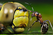 FEATURE: One for All - Ants
