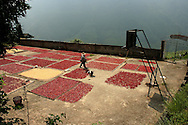 Cliff-side courtyard covered with red chili peppers drying in the sun in Ping'an area, Guangxi, China, Asia