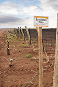 A vineyard sign saying Sauvignon Blanc Bodega Del Fin Del Mundo - The End of the World - Neuquen, Patagonia, Argentina, South America