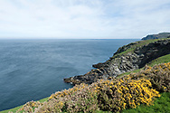 Hiking the Raad ny Foillan coastal path or 'Way of the Gull', Isle of Man. Coast between The Sound and Port Erin. © Rudolf Abraham
