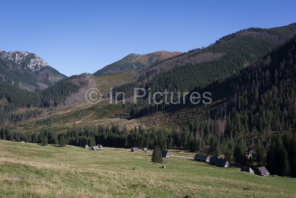 A landscape of traditional wooden agricultural huts on Polana Chocholowska a hiking route on Dolina Chocholowska in the Tatra National Park, on 17th September 2019, near Zakopane, Malopolska, Poland. Along the distant hill is a forest of spruce trees which have been badly affected by the European spruce beetle. The European spruce beetle Ips typographus is one of 116 bark beetles species in Poland which is killing thousands of spruces. The insects population can grow rapidly via wind and snow etc. which eventually leaves a gap in the landscape, thereby changing the forest floors ecology.