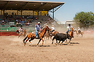 Will James Roundup, Ranch Rodeo, Cow Milking, Little Horn & Severe Teams, Hardin, Montana.
