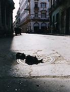 2000 August- Havana, Cuba- ' Shoes on a Sewer '  in Havana, Cuba