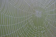 Spider web, Arachnidae sp. Eastern Rhodope mountains, Bulgaria