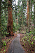 We walked a trail from the visitor center to the Big Trees Trail.