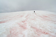 "A hIker descends snow below Tomyhoi Peak in Mount Baker Wilderness, Washington. The snow is made red (""watermelon snow) by the presence of algae during the summer snow melt."