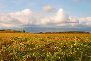 Chateau St Jean d'Aumieres, Gignac village. Terrasses de Larzac. Languedoc. France. Europe. Vineyard.