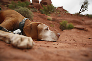 SHOT 5/7/16 11:34:48 AM - Moab is a city in Grand County, in eastern Utah, in the western United States. Moab attracts a large number of tourists every year, mostly visitors to the nearby Arches and Canyonlands National Parks. The town is a popular base for mountain bikers and motorized offload enthusiasts who ride the extensive network of trails in the area. Includes images of Scenic Byway 128, Fisher Towers and downtown Moab. (Photo by Marc Piscotty / © 2016)