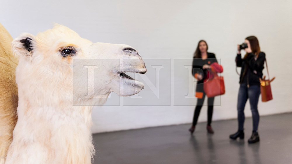 """© Licensed to London News Pictures. 19/05/2016. London, UK. Yang Maoyuan's """"Mandala Camel no. 2"""" catches the eye of these visitors.  Art16 opens at Olympia, in west London.  Now in its fourth edition, the fair brings together over 100 galleries from more than 30 countries showcasing a diverse cross-section of work by contemporary artists from around the world for buyers and art enthusiasts to visit. Photo credit : Stephen Chung/LNP"""