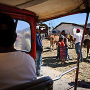 Passing an annual cattle market on the outskirt of Chichicastengo in a tuk-tuk. Chichicastenango is an indigenous Maya town in the Guatemalan highlands about 90 miles northwest of Guatemala City and at an elevation of nearly 6,500 feet. It is most famous for its markets on Sundays and Thursdays.
