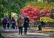 © Licensed to London News Pictures. 30/10/2012. Winkworth, UK A couple walk through the colourful trees. Autumn Colour at Winkworth Arboretum in Surrey today 30th October 2012. Photo credit : Stephen Simpson/LNP