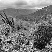 Reserva Natural, Valle Tranquilo, Bahia de san Quintin, Baja California, Mexico