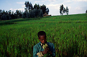 An Ethiopian child in a field of crops in the village of Merket, badly affected in the Ethiopian famine of 1984, Ethiopia.