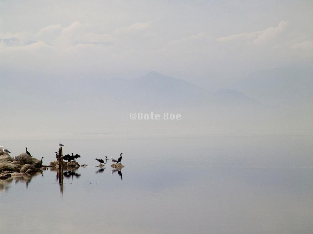 Tranquil view of birds on rocks Salton Sea lake bird sanctuary USA