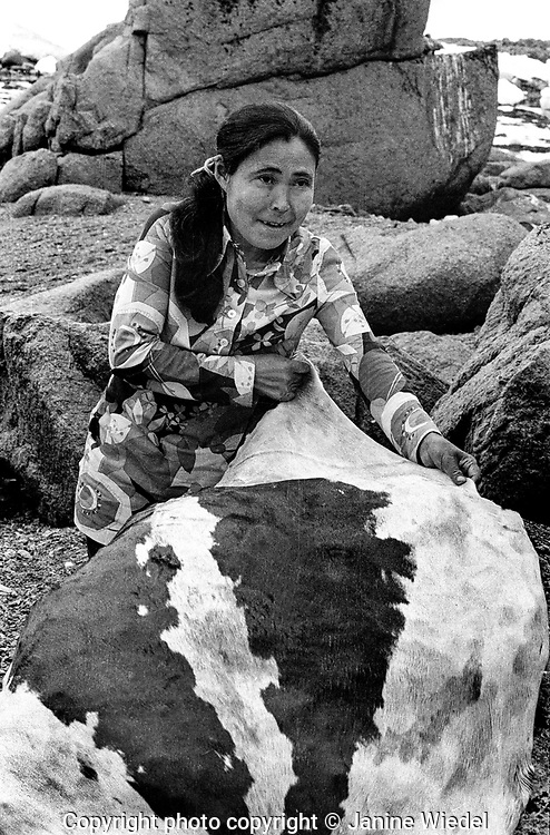 Woman stretching and preparing seal skin. Inuit family living in tents for the summer live off the land. nr Pangnirtung a small settlement in the Canadian Arctic in the territory of Nunavut (North West Territories) 1973