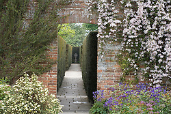 View through arch along the Yew Walk at Sissinghurst Castle Garden. Clematis montana var. rubens 'Tetrarose'  trained on the brick wall