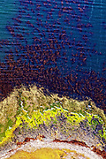 Aerial view creates an abstract pattern of sea, sand, with colorful lichens and seaweed flying over the Falkland Islands.