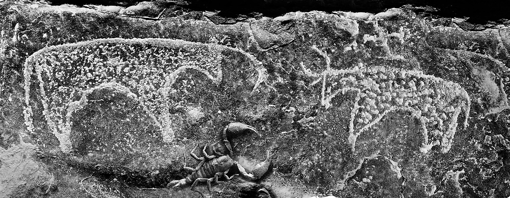 Sacred Stone - Black and white photo art print of Saharan petroglyph rock art carvings by Paul Williams. Prehistoric Saharan petroglyph rock art carvings of cattle from a site 20km east of Taouz, South Eastern Morocco .<br /> <br /> Visit our LANDSCAPE PHOTO ART PRINT COLLECTIONS for more wall art photos to browse https://funkystock.photoshelter.com/gallery-collection/Places-Landscape-Photo-art-Prints-by-Photographer-Paul-Williams/C00001WetsxVxNTo