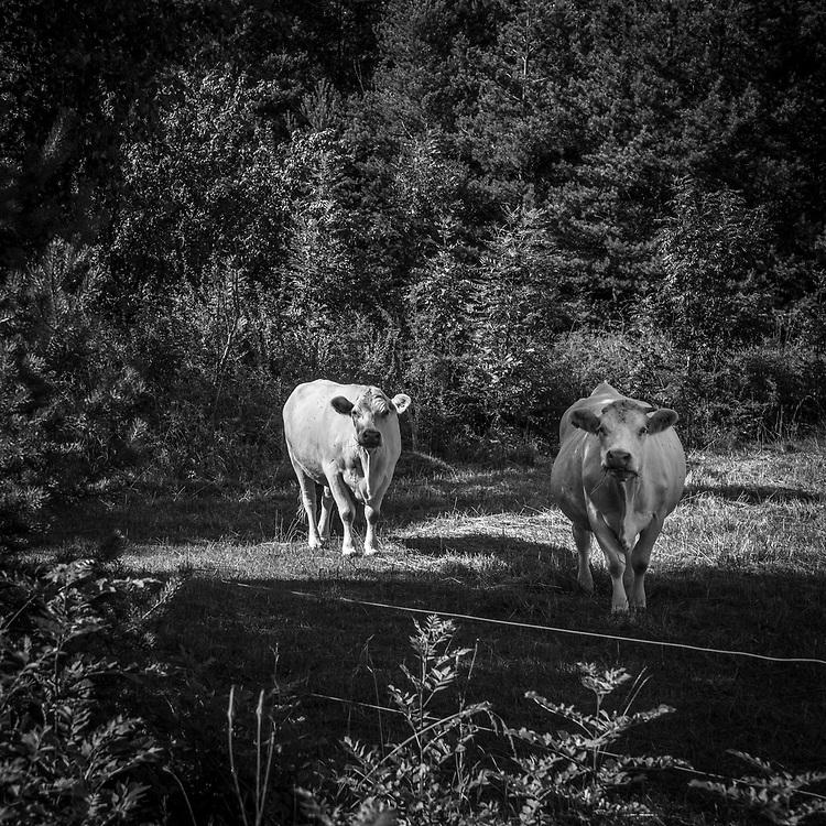 I en hage på södra Gotland