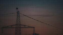 THEMENBILD - ein Vogelschwarm auf einer Stromleitung mit einem Masten im Sonnenuntergang, aufgenommen am 01. Oktober 2019 in Kaprun, Oesterreich // a flock of birds on a power line with a pole at sunset in Kaprun, Austria on 2019/10/08. EXPA Pictures © 2019, PhotoCredit: EXPA/ JFK
