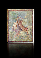 Roman Nero Period fresco wall painting of Perseus and Andromeda, from a house in the Insula Occidentalis at Pompeii , inv 9058 , Naples National Archaeological Museum , black background .<br /> <br /> If you prefer to buy from our ALAMY PHOTO LIBRARY  Collection visit : https://www.alamy.com/portfolio/paul-williams-funkystock - Scroll down and type - Roman Fresco Naples  - into LOWER search box. {TIP - Refine search by adding a background colour as well}.<br /> <br /> Visit our ROMAN ART & HISTORIC SITES PHOTO COLLECTIONS for more photos to download or buy as wall art prints https://funkystock.photoshelter.com/gallery-collection/The-Romans-Art-Artefacts-Antiquities-Historic-Sites-Pictures-Images/C0000r2uLJJo9_s0