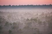 Uniform layer of fog in gentle dawn light over bog pines, Kemeri National Park (Ķemeru Nacionālais parks), Latvia Ⓒ Davis Ulands   davisulands.com