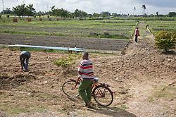 Men working on Organiponico Vial; Pinar del Rio; Cuba,