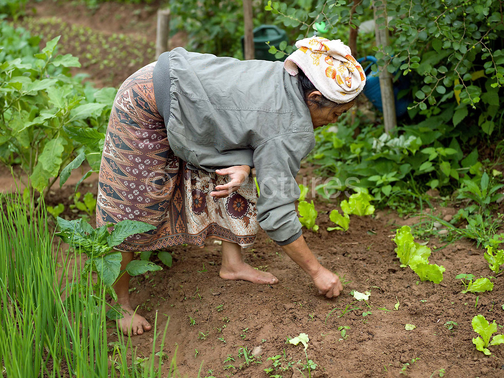 In the early morning, a vegetable grower weeds her garden in the small riverside town of Sampan, Phongsaly province, Lao PDR. The banks of the Nam Ou river in Sampan are lined with recession planting - advancing as the dry season sets in and the river's level drops, receding as the rains come and it rises once again.